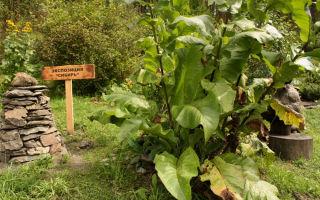 Горно-Алтайский ботанический сад (24 фото)