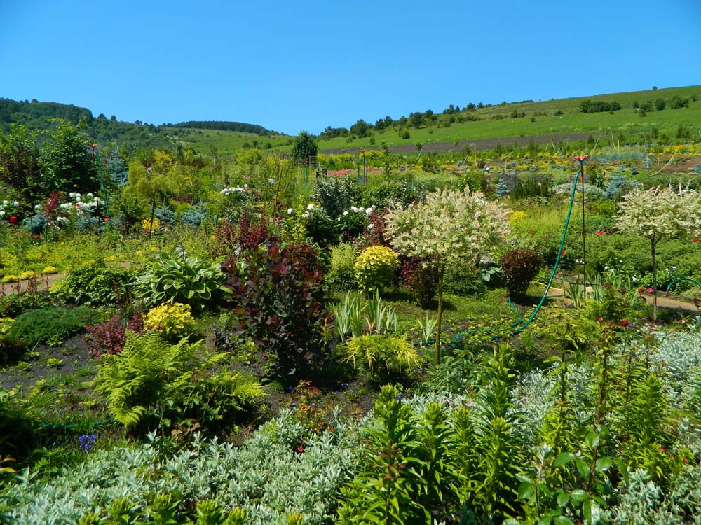 флора Цветочной долины