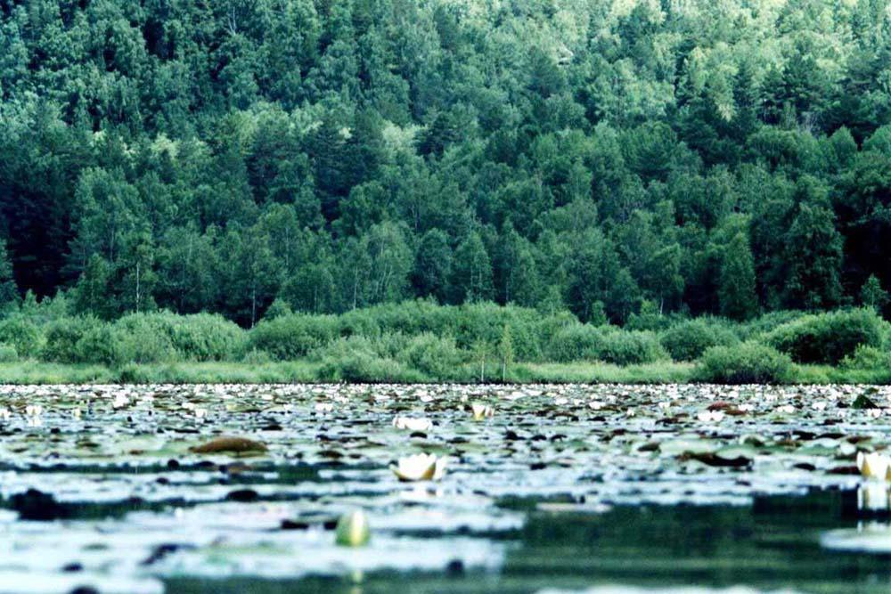 растительность на озере
