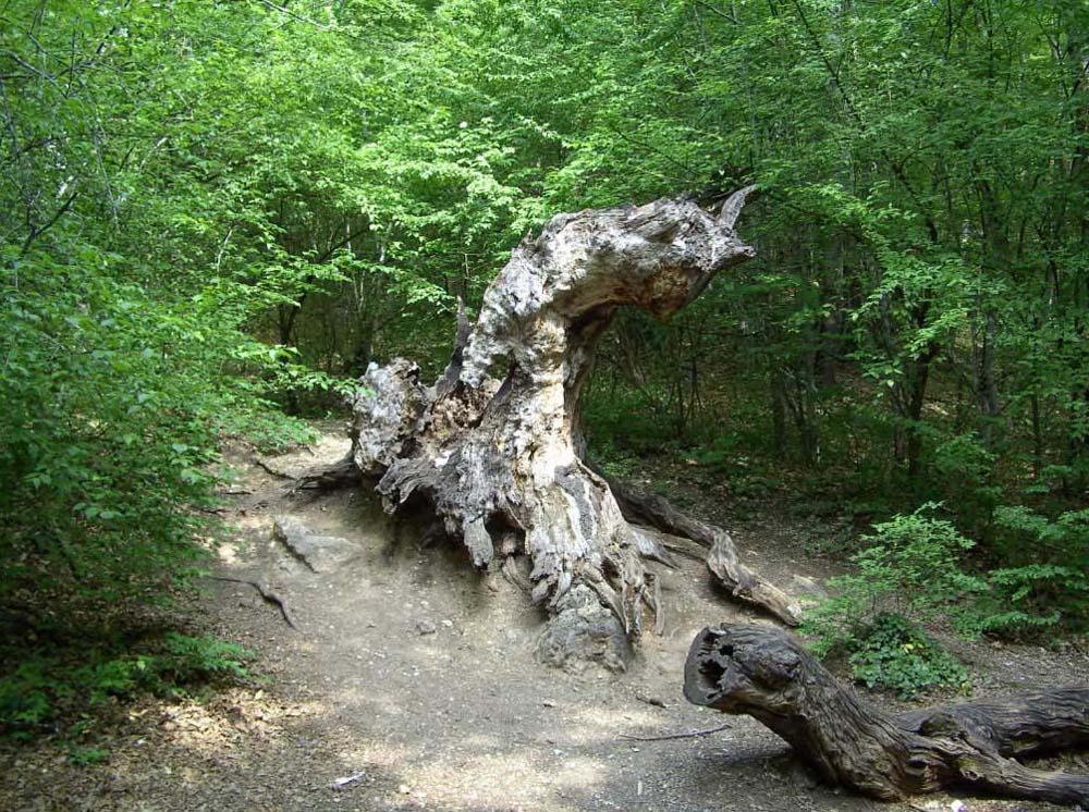 почтовый дуб