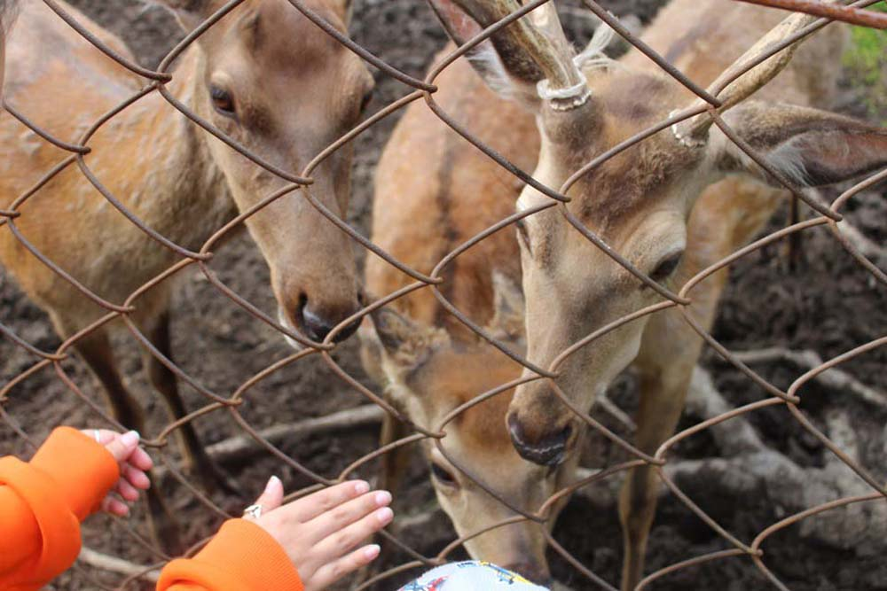 какие милашки в зоопарке