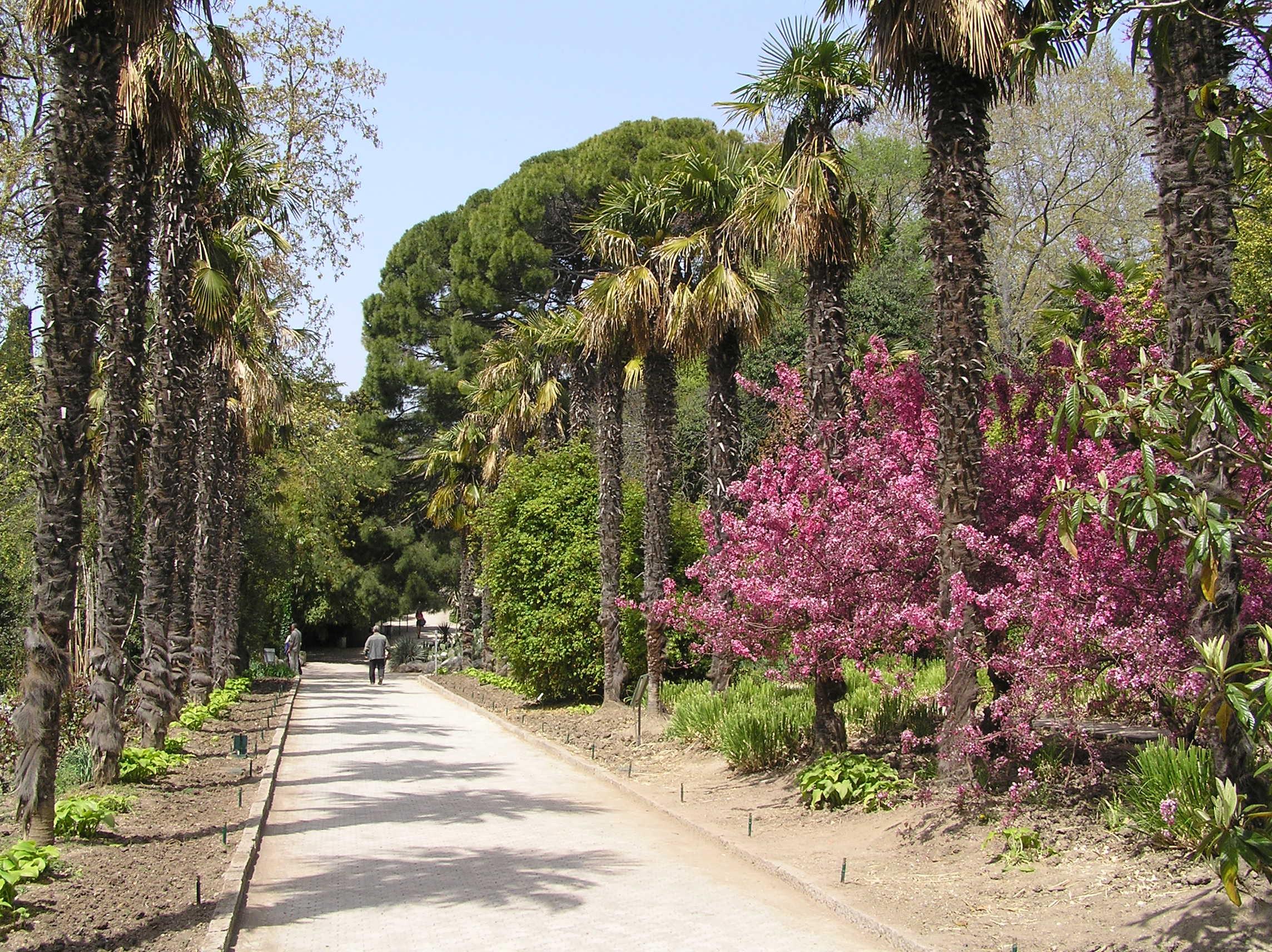 аллея Никитского ботанического сада