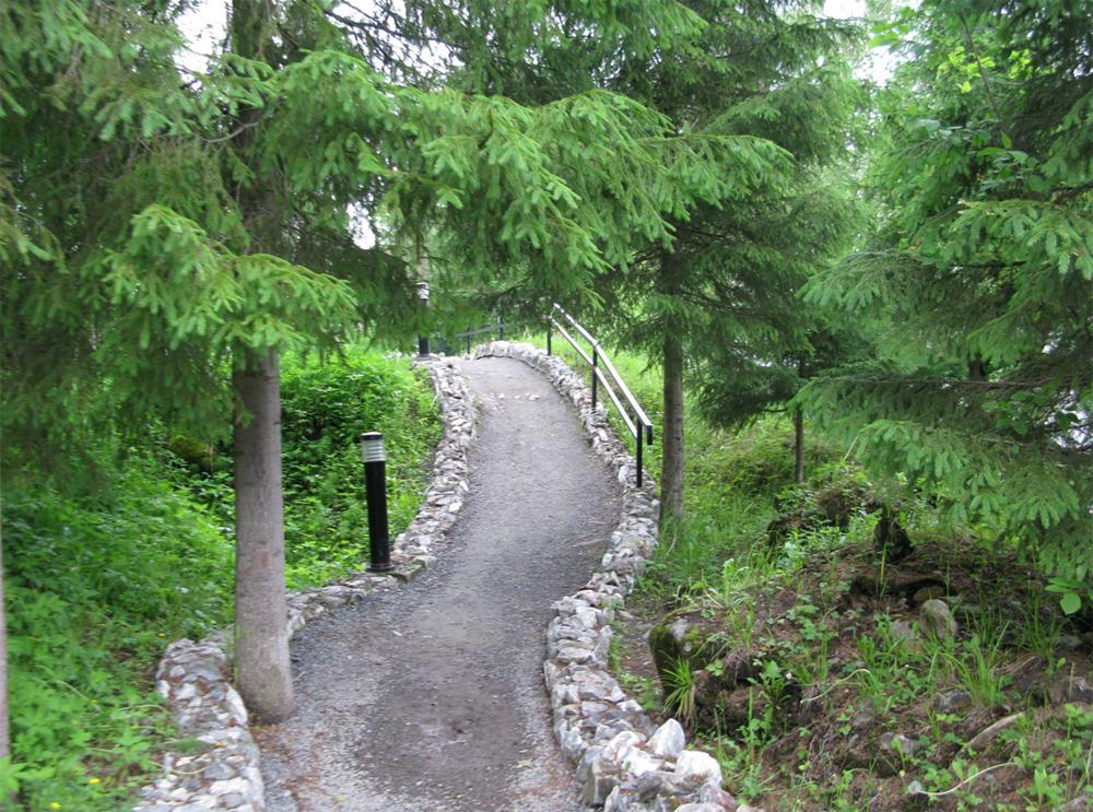 прогулки по хвойному лесу