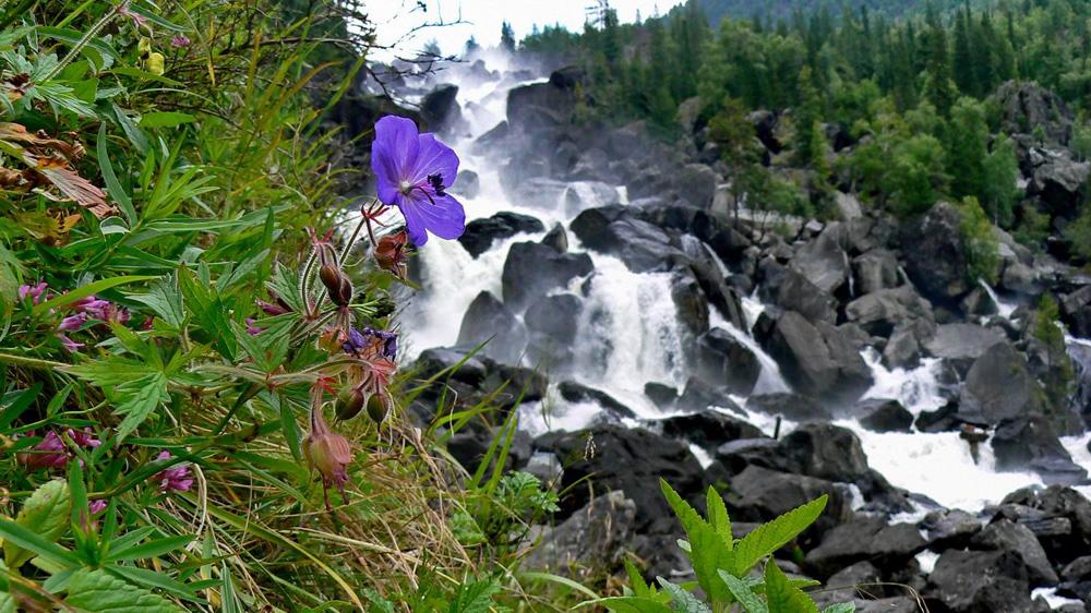 Цветок на фоне водопада