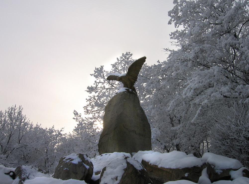 орел Железноводска зимой
