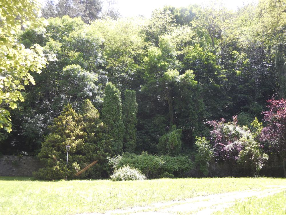 красивое место в парке