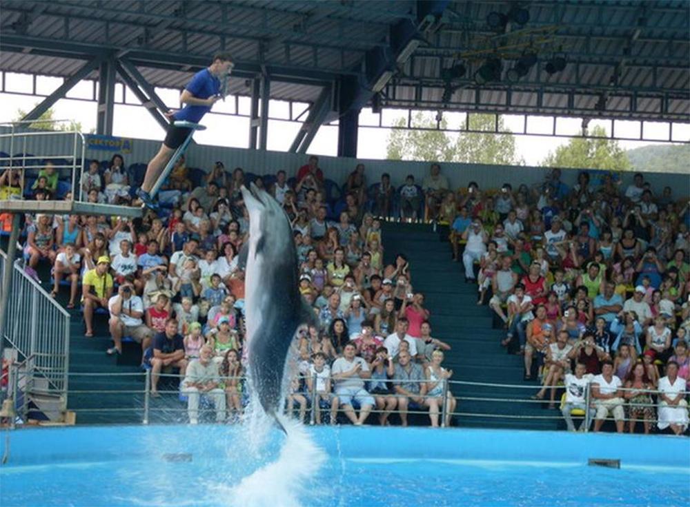 смотреть выступление дельфинов